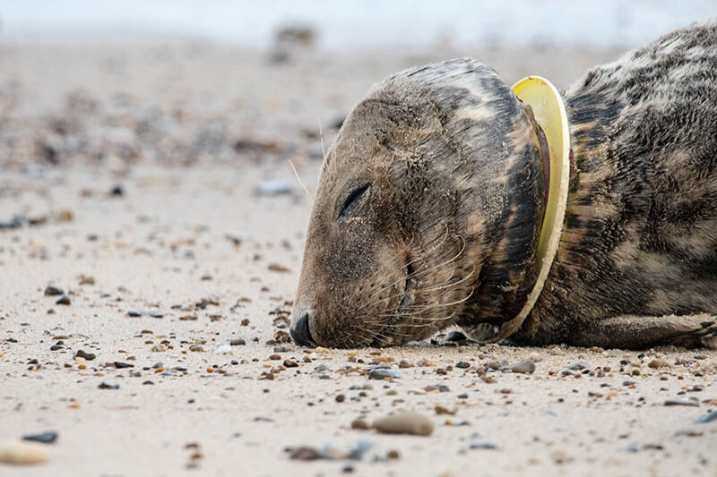 Seal with plastic around neck
